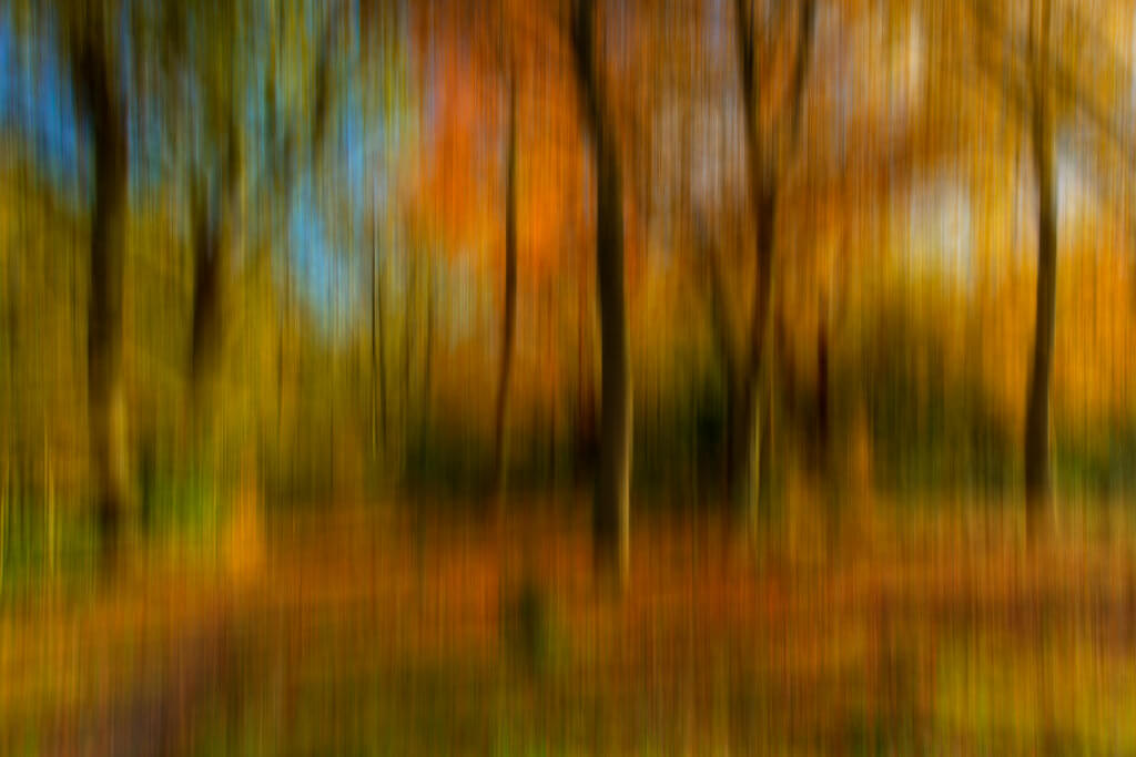Paul Shears - Autumn Abstract